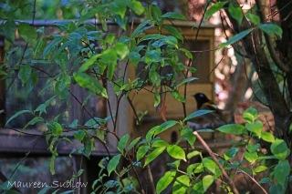 stitchbird find