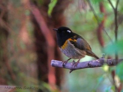 stitchbird three