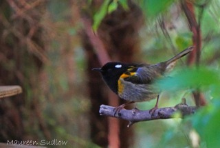 stitchbird two