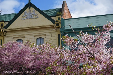spring in Whanganui five