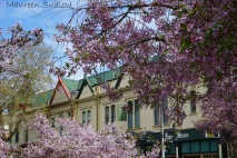 spring in Whanganui four