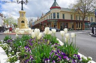 spring in Whanganui