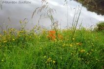 riverbank two